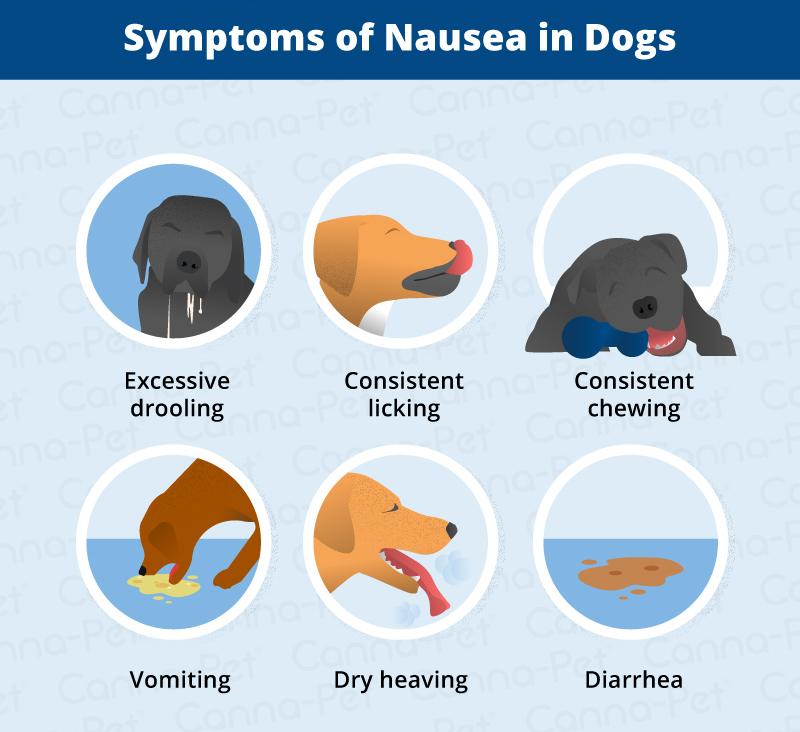 Symptoms of Dog Nausea