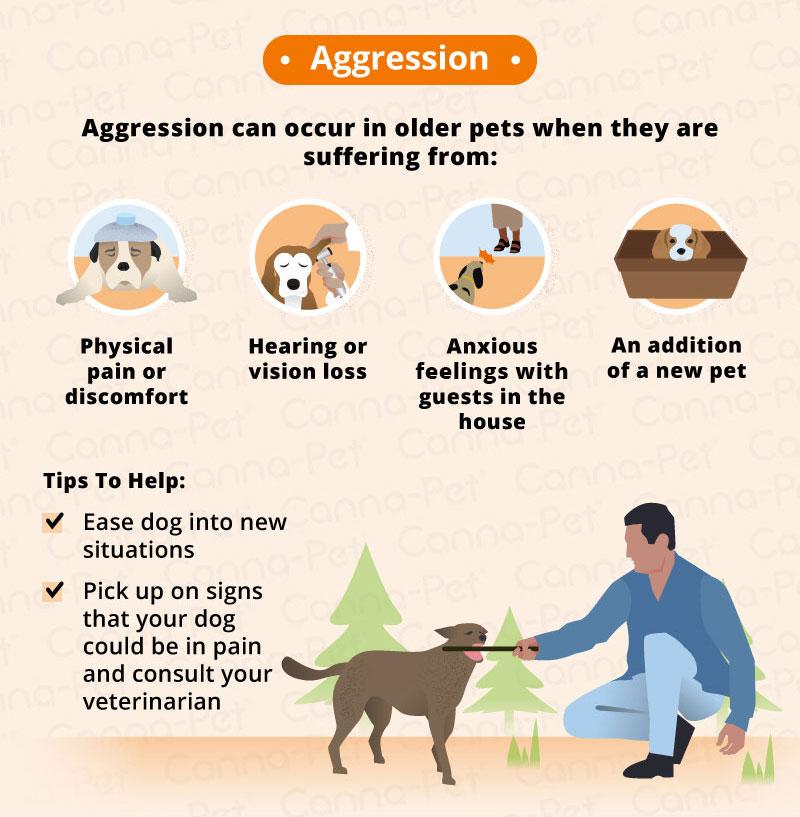 Behavioral Problems in Older Dogs | Canna-Pet