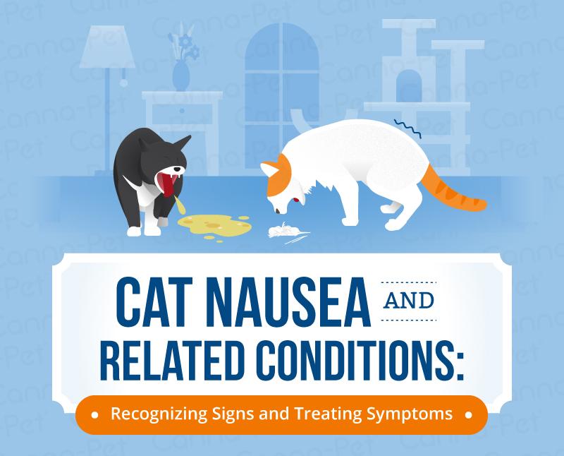 Cat Nausea Amp Natural Treatments Canna Pet