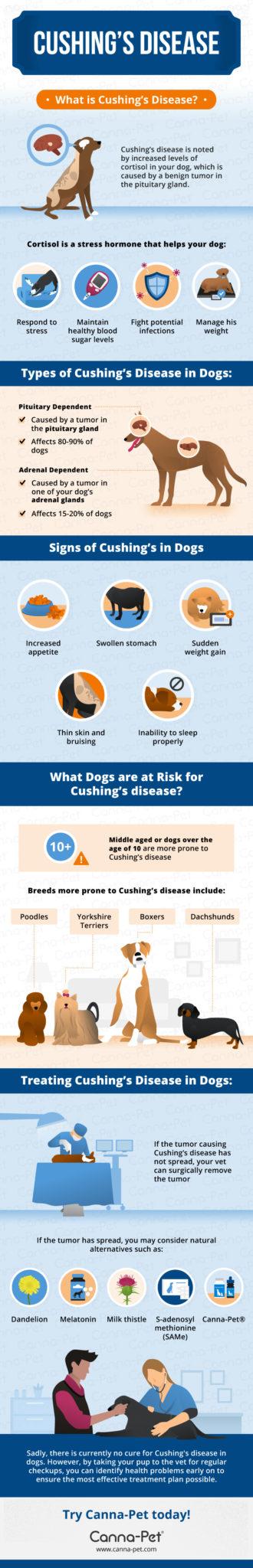 Cushings Disease in Dogs Canna Pet
