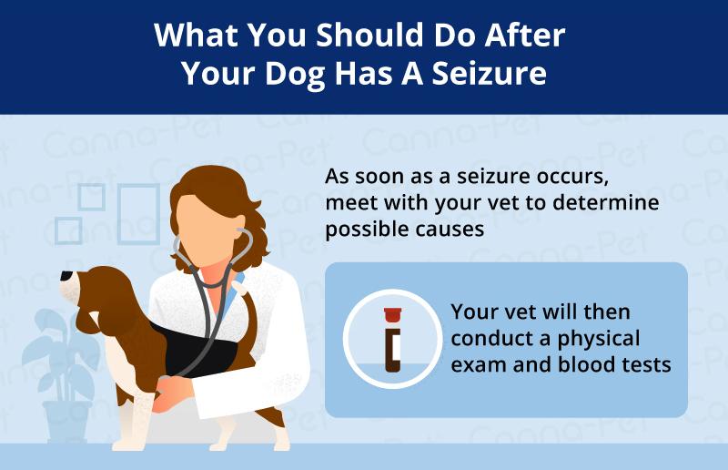 treating a dog seizure