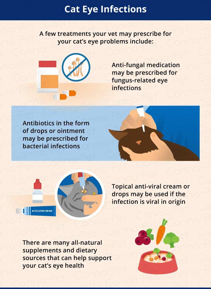 Cat Scratch Fever Treatment Natural Cure