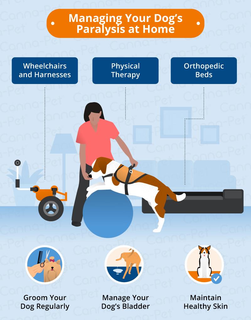 managing dog paralysis at home