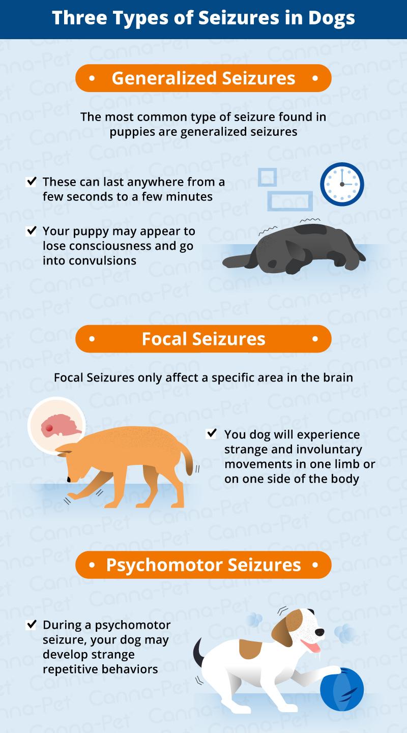 Seizures in Puppies: Causes & Symptoms | Canna-Pet