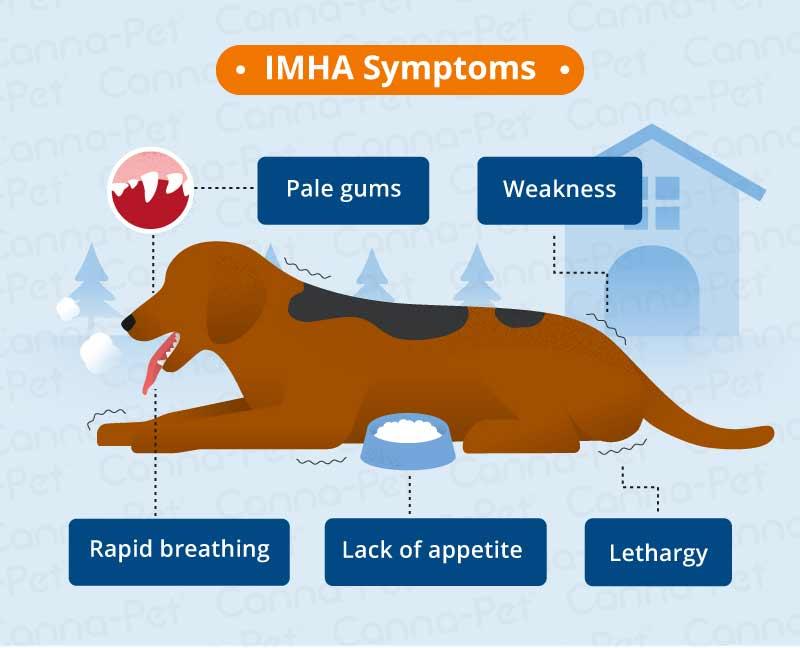 IMHA symptoms
