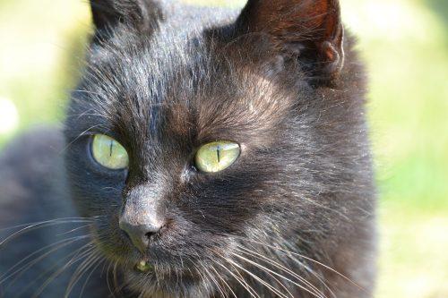 Cat Skin Ps Canna Pet