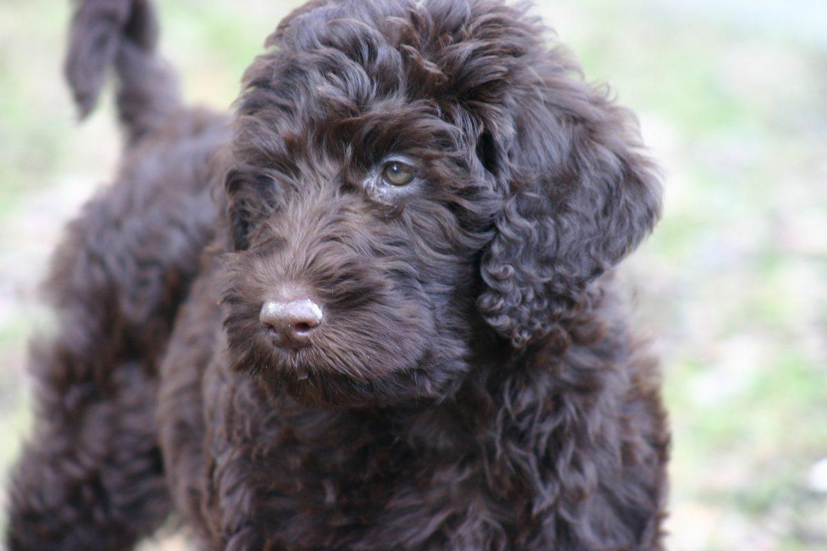 Most Popular Dog Treats