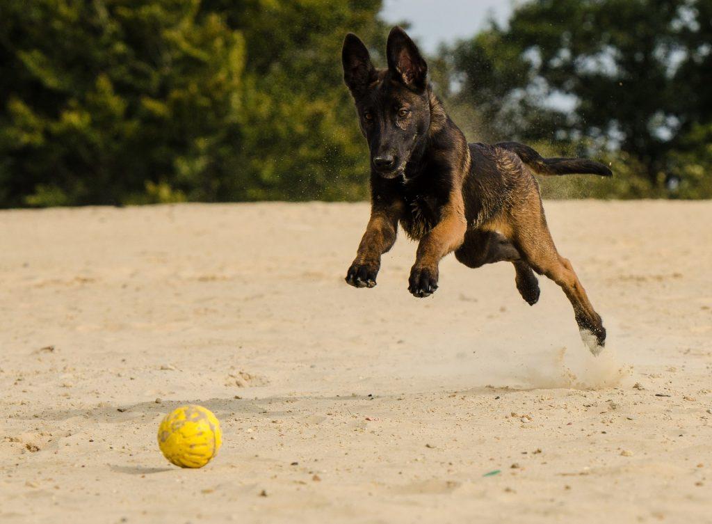 athletic dog breeds_canna-pet