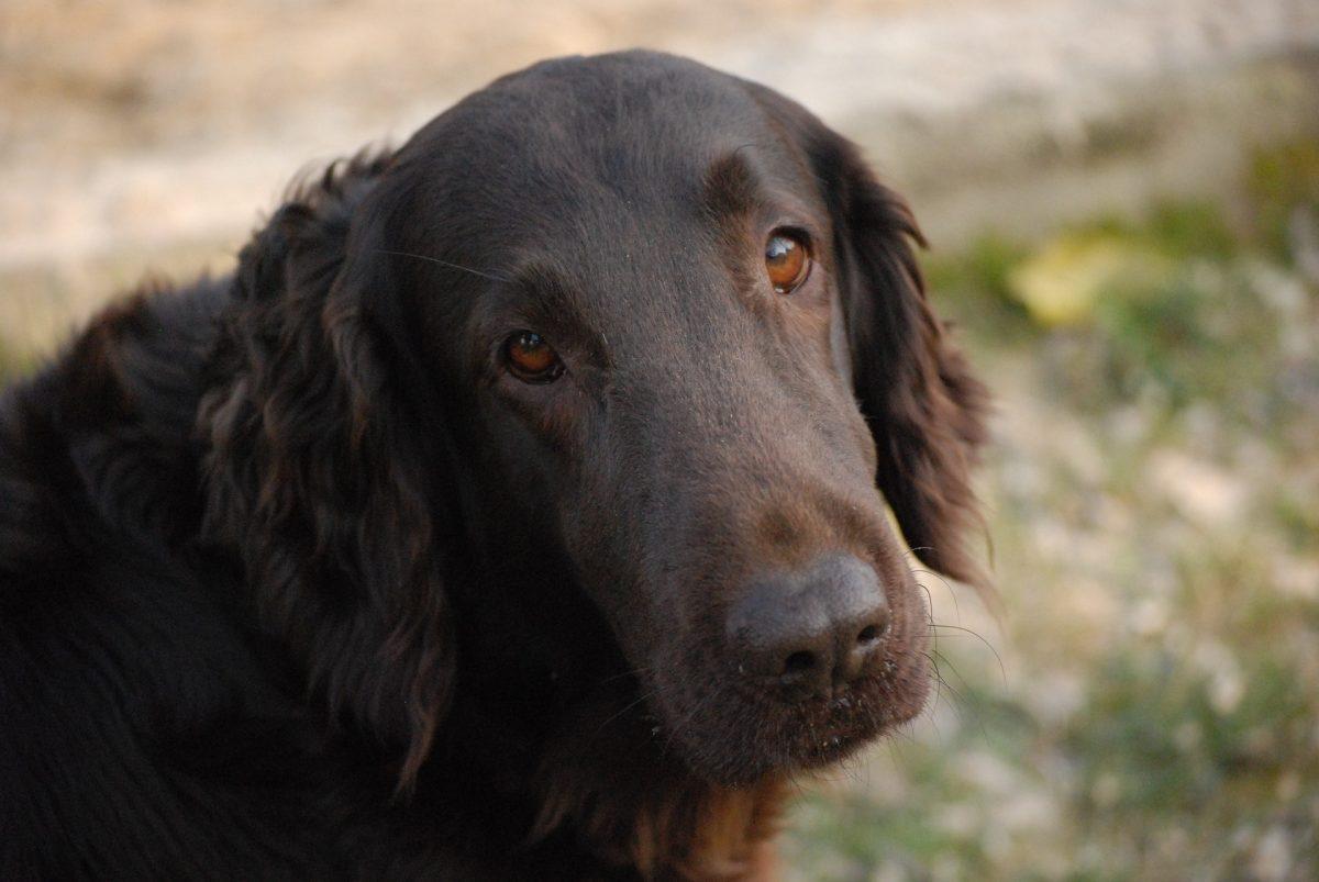pemphigus in dogs_canna-pet