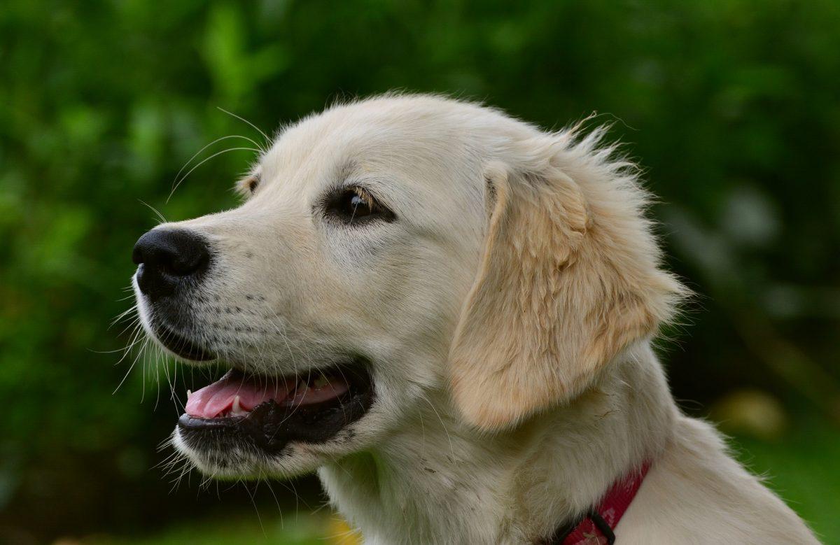dog skin rashes_canna-pet