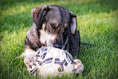 how to treat dog hotspots_canna-pet
