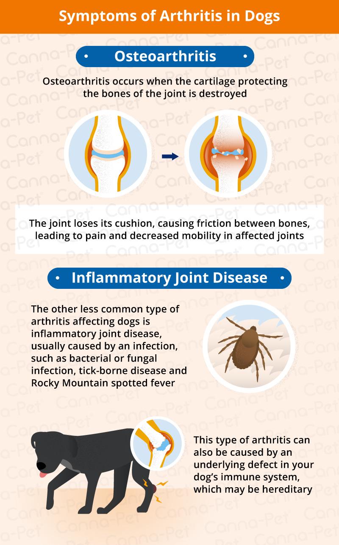 Dog Arthritis Symptoms Amp Natural Remedies Canna Pet 174