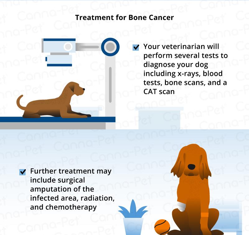 treatment of dog bone cancer